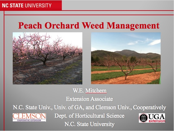 Peach Orchard Weed Management cover
