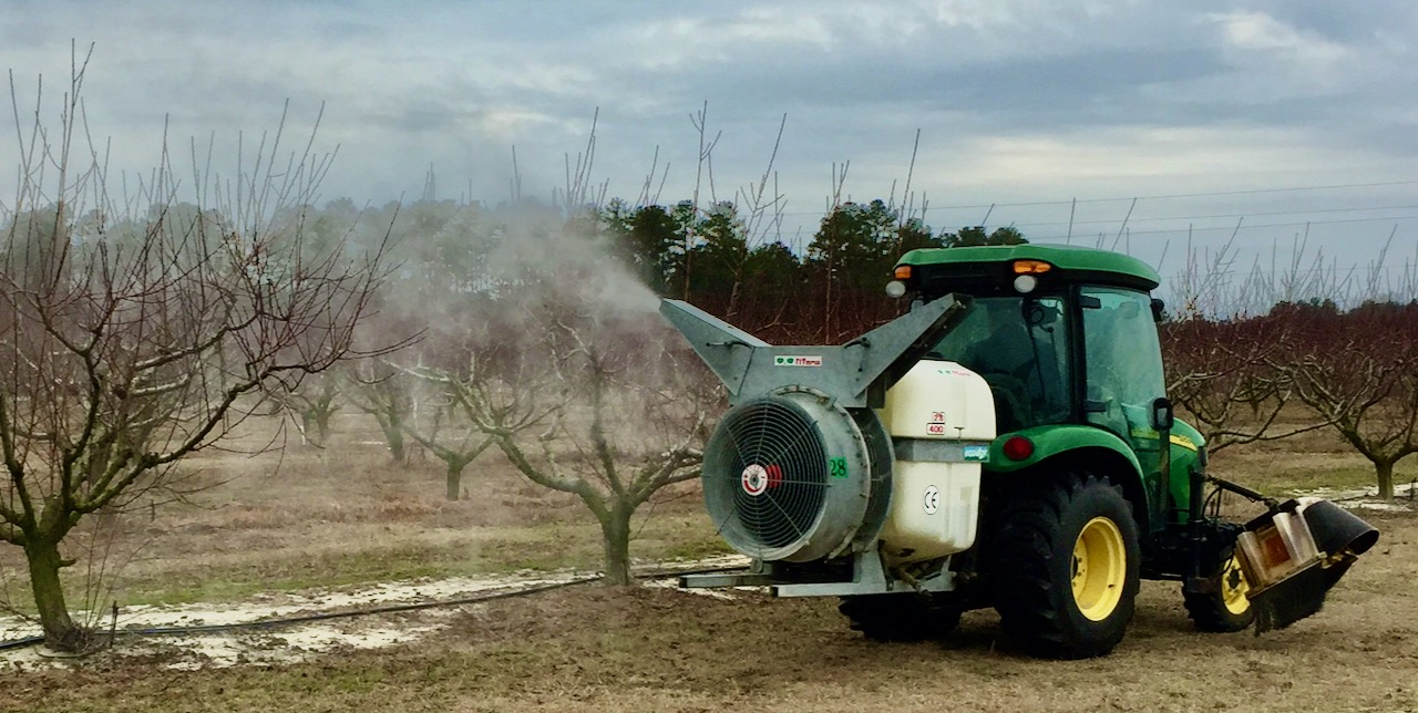 Airblast sprayer with peach trees